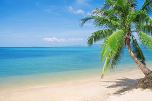 beach-with-coconut-palm-and-sea.jpg