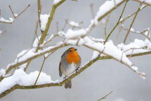 snow-image-5-828893863-95480.jpg
