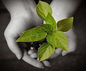 v-day-blog-seedling-tree-dedication1-300x246.jpg